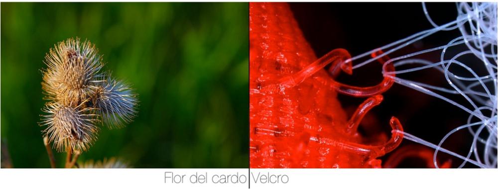 Resultado de imagen para velcro + biomimesis